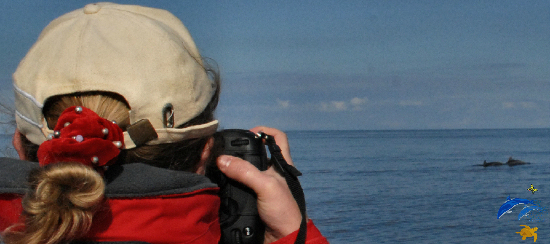 Reseacher photographing local bottlenose dolphins